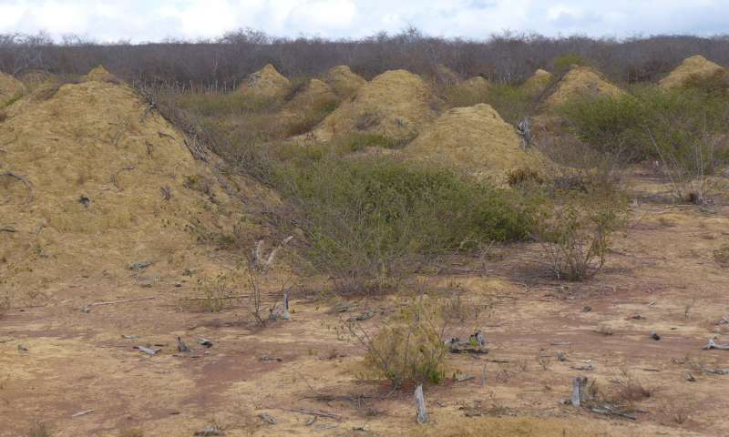 Brazilian dirt piles as massive as Great Britain resulted from termite tunnels, proves latest study