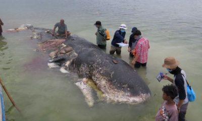 Whale Carcass spurts out 1000 plastic pieces including 2 flip-flops