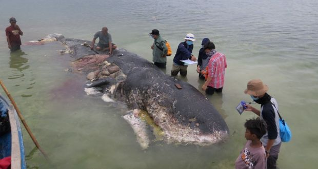 Whale Carcass spurts out 1000 plastic pieces including 2 flip-flops