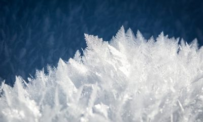 cold temperature increases lifespan - challenged
